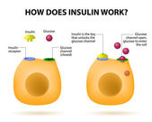 How does insulin work — Vector de stock