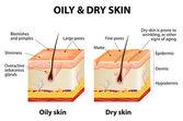 Oily & dry skin — Stock Vector