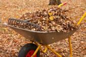 Outono no jardim — Foto Stock