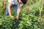 Young farmer — Stock Photo