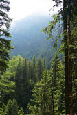 Sunny morning in the Romania mountains — Stock Photo