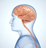 The brain in the transparent head on the light-blue background — Stock Photo