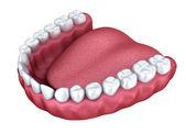 3d open denture isolated on white — Stock Photo