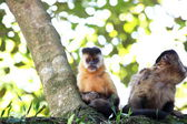 Monkeys nails on the branch — Stock Photo