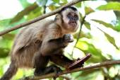 Monkey on the branch — Stock Photo