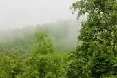 Nuages avec la montagne et des arbres — Photo