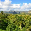 The Vinales valley in Cuba a famous tourist destination and a major tobacco growing area — Stock Photo #71513921