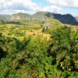 The Vinales valley in Cuba a famous tourist destination and a major tobacco growing area — Stock Photo #71514209