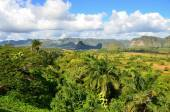 The Vinales valley in Cuba a famous tourist destination and a major tobacco growing area — Stock Photo