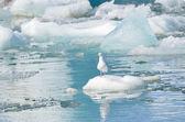 The glacial lagoon Jokûlsaurloun, Iceland — Foto Stock