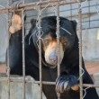 Sad bear in a cage — Stock Photo #66941997