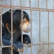 Sad bear in a cage — Stock Photo #66948223