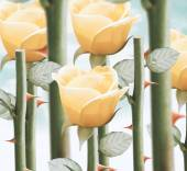 Yellow garden roses — Stock Photo