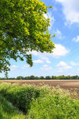 Countryside landscape with ditch and cultivated farm field — Stock Photo