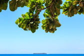 View from underneath a tree on a tropical island — Stock Photo