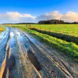 Постер, плакат: Rural landscape with wet road and grassland