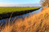 A grassland and ditch at sunset in a dutch landscape — Stock Photo