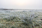 Close up of grass with hoar frost on a winter day — Stock Photo