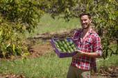 Farmer with avocados — Stockfoto