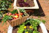 Frutta e verdura biologica — Foto Stock