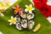 Half dozen oysters — Stock Photo