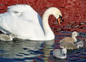 母の白鳥と彼女の若者 — ストック写真