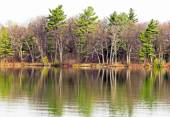 Beautiful tall Evergreen trees reflected in Lake waters in Springtime — Stock Photo