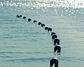 Buoys strung together on beautiful blue sparkling waters in early morning.  Safety buoys to create safe swimming area for swimmers — Stock Photo