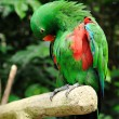 Beautiful parrot — Stock Photo #54256885