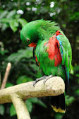 Beautiful parrot — Stock Photo