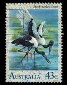 Australia stamp shows Black-necked Stork — Stock Photo