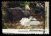 A stamp printed in Australia (Antarctic Territory), shows the Northern giant petrel (Macronectes halli) — Stock Photo