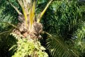 Palm Oil with leaf — Stockfoto
