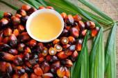 Palm oliehoudende vruchten — Stockfoto