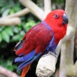 Beautiful parrot — Stock Photo #61486459