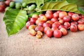 Świeże surowe ziarna kawy — Zdjęcie stockowe