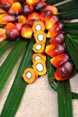 Sementes de óleo de palma — Fotografia Stock