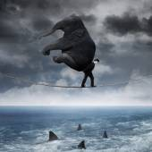 Person with an elephant above sea — Stock Photo
