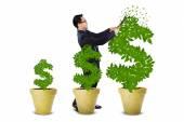 Businessman treats the money trees — Stock Photo