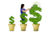 Woman maintain the money tree — Stockfoto