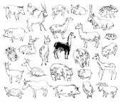 Wild Animals. Zoo. Set. Hand-drawn — Stock Vector