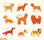 Dog breeds — Stock Vector