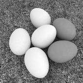 Eggs on the grass — Photo