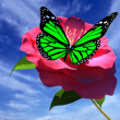 Beautiful Flower and butterfly against the sky — Stock Photo #62515507