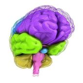 Creative concept of the human brain — Stock Photo