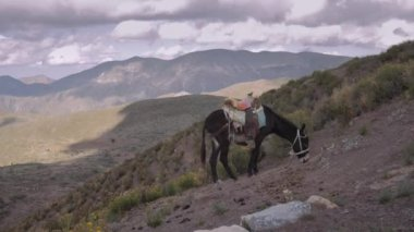 Donkey grazing on a promontory — Stock Video