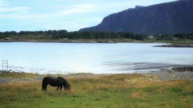 Horse grazing in meadow — Stock Video