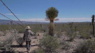 Shepherd searching oasis — Stock Video
