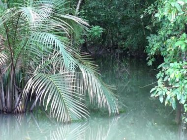 Small tropical lake in the jungle. A variety of tropical plants. Idyll. — Stockvideo