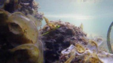 Scuba Safaris. Corals, sand and sea life. Philippines. — Stock Video